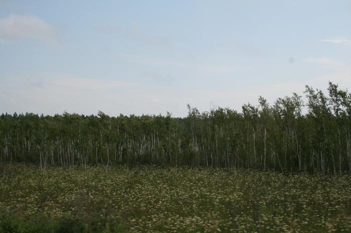 По дороге из Западной Сибири. Часть II. Командировка, Западная сибирь, Дорога, Север, Начинающий фотограф, Длиннопост