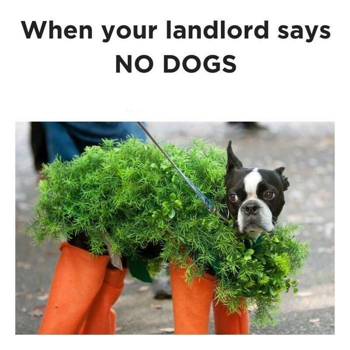 Когда арендодатель запретил держать собак в квартире. Аренда, Собака, Съемная квартира, Арендодатель, Reddit