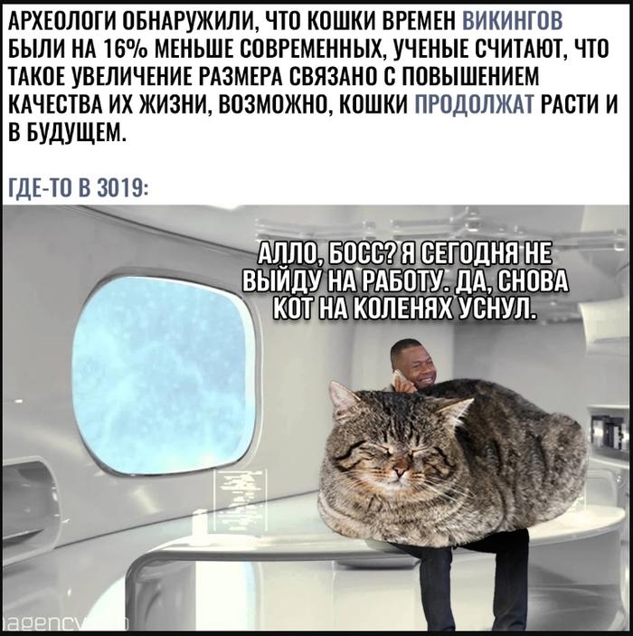 Немножко о кошках Кот, Викинги, Рост, Археологи, Мемы, Картинка с текстом