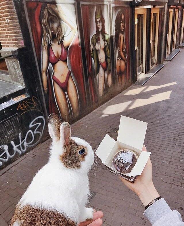 Кроликопост Кролик, Прогулка, Путешествия, Длиннопост