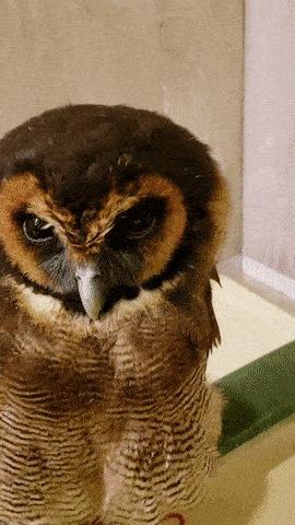 Как легко уложить спать сову.
