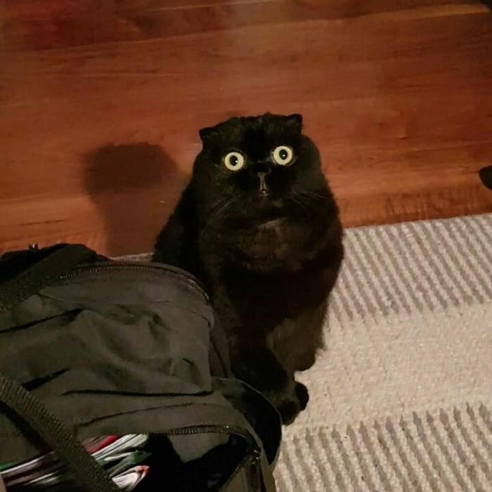 Кот сломался Кот, Страх, Сломал систему, Животные
