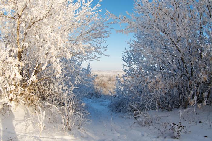 Пришла красавица зима! Зима, Лес, Фотография, Nikon d90, МС Зенитар 16мм, Фишай, Длиннопост