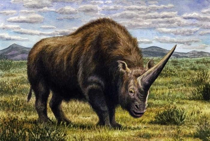 Во время освоения Евразии кроманьонцы еще могли встречать гигантских носорогов эласмотериев Палеонтология, Наука, Носорог, Эласмотерий, Копипаста, Elementy ru, Ледниковый период, Длиннопост