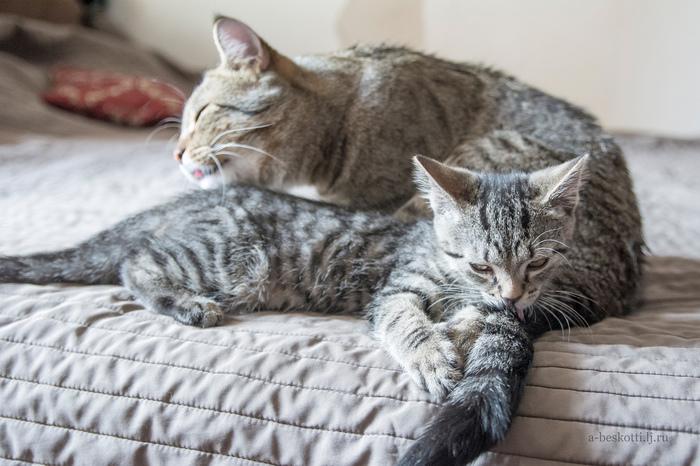 Без кота жизнь не та! Без котов жизнь не... Кот, Котята, Котомафия, Домашние животные, Животные, Длиннопост
