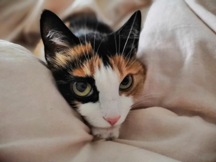 Наша любимица Мелисса греется под одеялом в предновогоднее холодное время