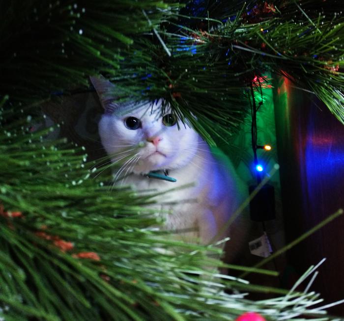 Лучший твой подарочек, это я! Кот, Сосна, Новый Год, Новогоднее чудо, Подарок под ёлкой