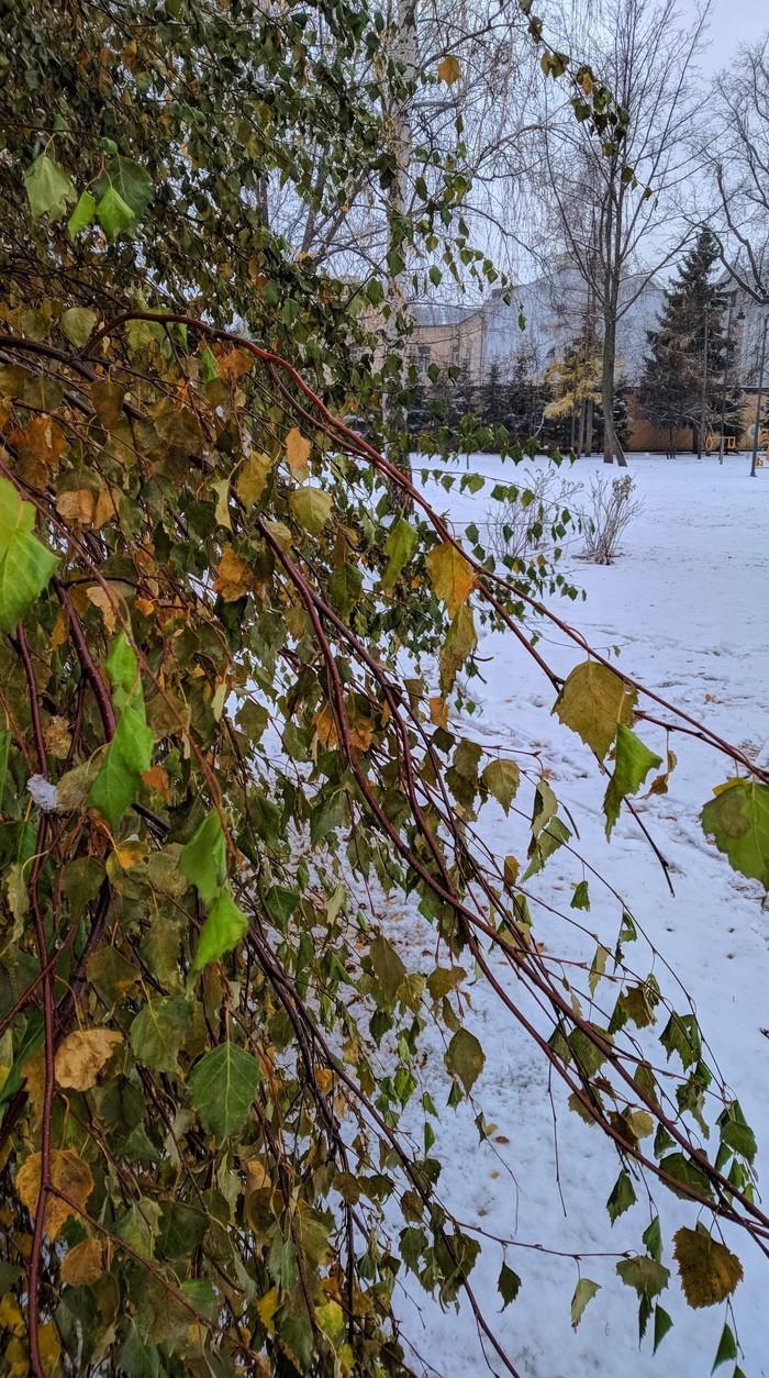 Контраст Зима, Белая береза, Мобильная фотография