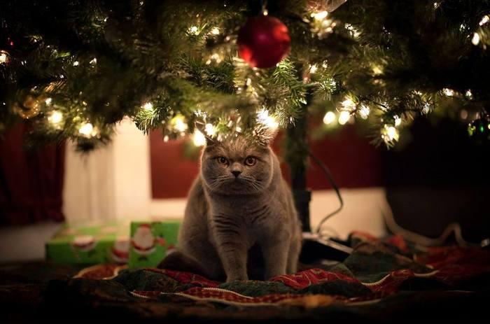А ты уже купил своему коту новогодний подарок?