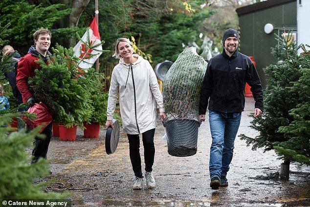 Экоферма позволяет семьям арендовать одну и ту же праздничную ель на срок до 10 лет Экоферма, Новогодняя елка, Выбросил елку, Экология, Длиннопост
