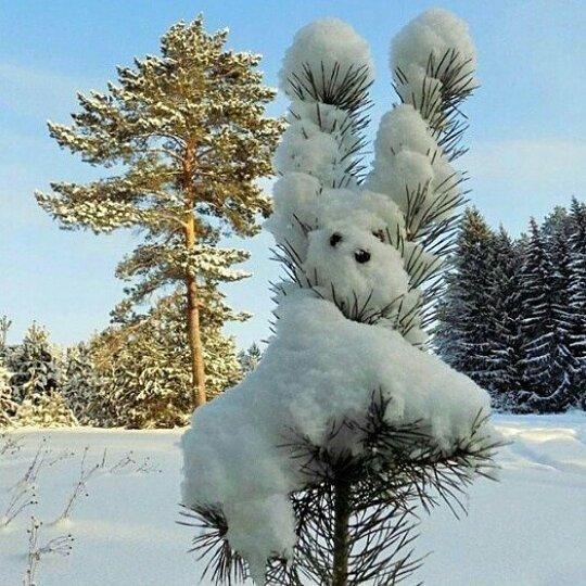 Зайку бросила хозяйка. От волков спасался зайка... Новый Год, Зимний лес, С наступающим