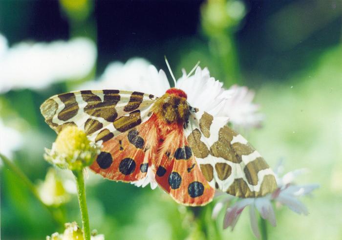 Мое любимое пленочное фото Фотография, Макро, Фотопленка, Ностальгия, Бабочка