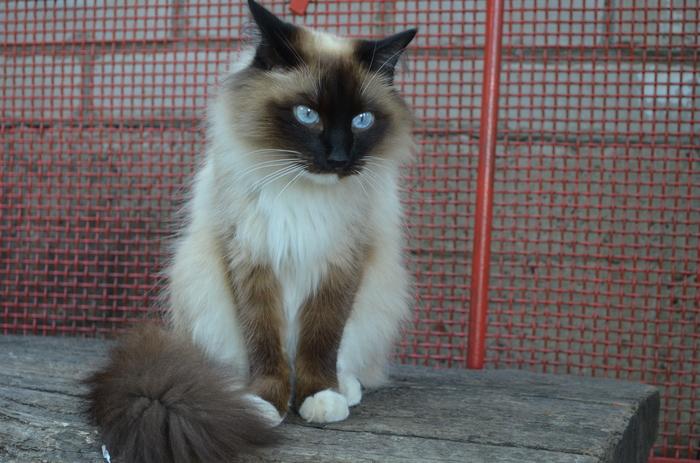 Приключение кота Матроскина.... Кот, Кот Матроскин, Ёлка, Новый год, Подготовка к новому году, Длиннопост