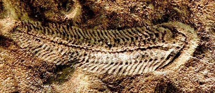 Первые крупные многоклеточные могли нормально дышать лишь в термостабильных условиях морских глубин Многоклеточные, Вендская биота, Эдиакарий, Кембрийский взрыв, Эволюция, Длиннопост