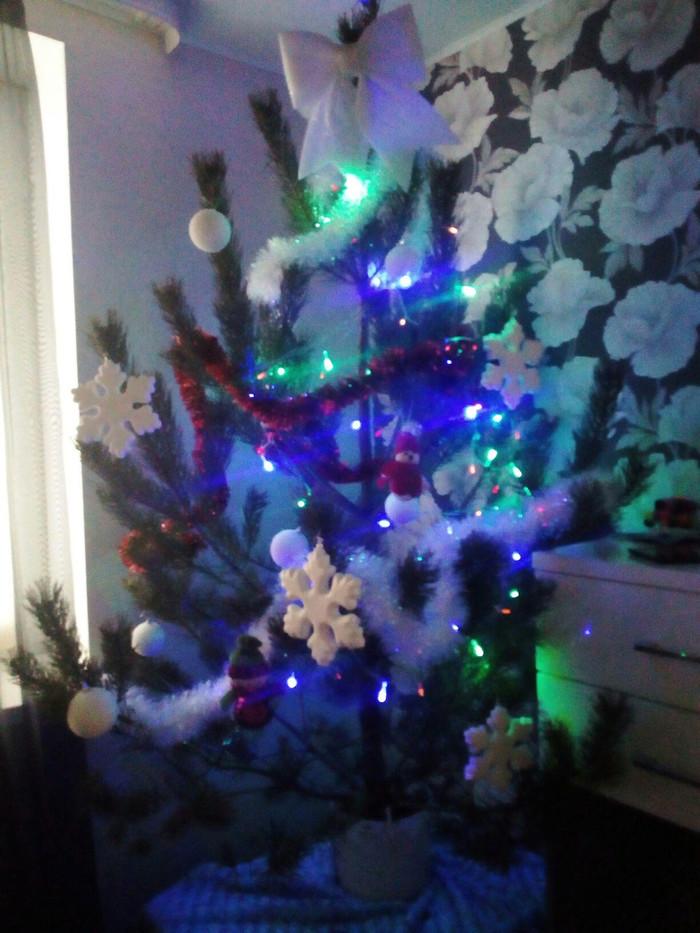 Сосна Сосна, Ёлка, Новый год, Фотография, Длиннопост