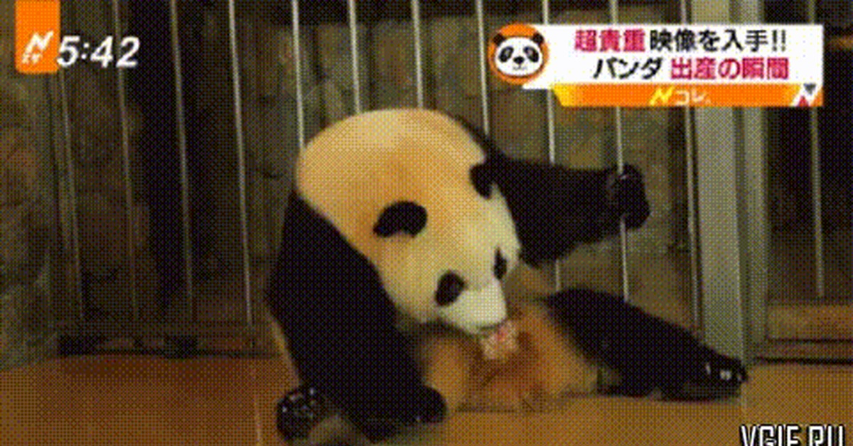 Самолетами, панда и качели гифка