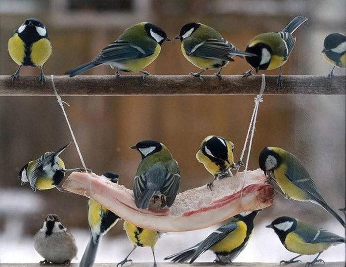 Птички Зима, Птицы, Синица, Сало, Мышь