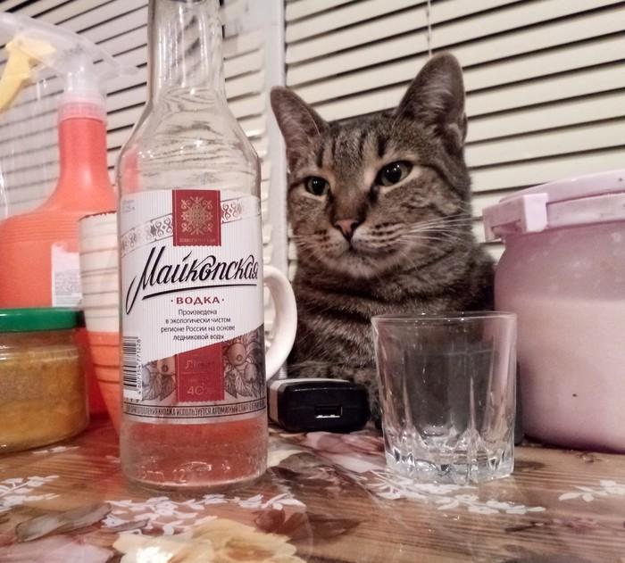 Тоска печаль у кота