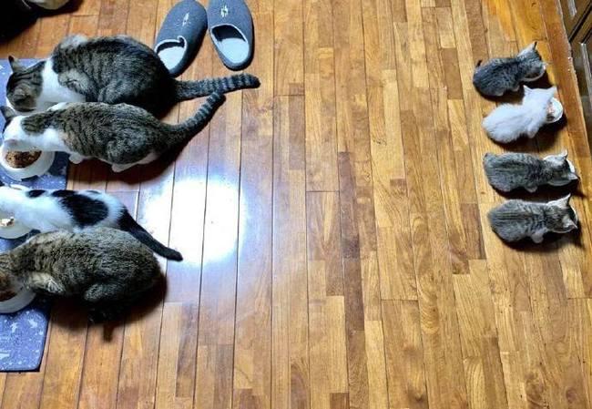 Порядок в котомафии