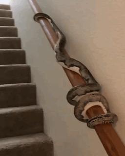 Как змейки поднимаются по лестницам.