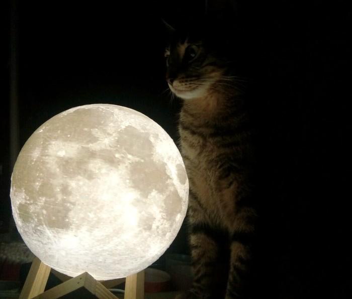 Кошка и её луна