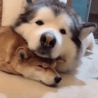 Только по большой дружбе можно так безропотно выполнять роль подушки
