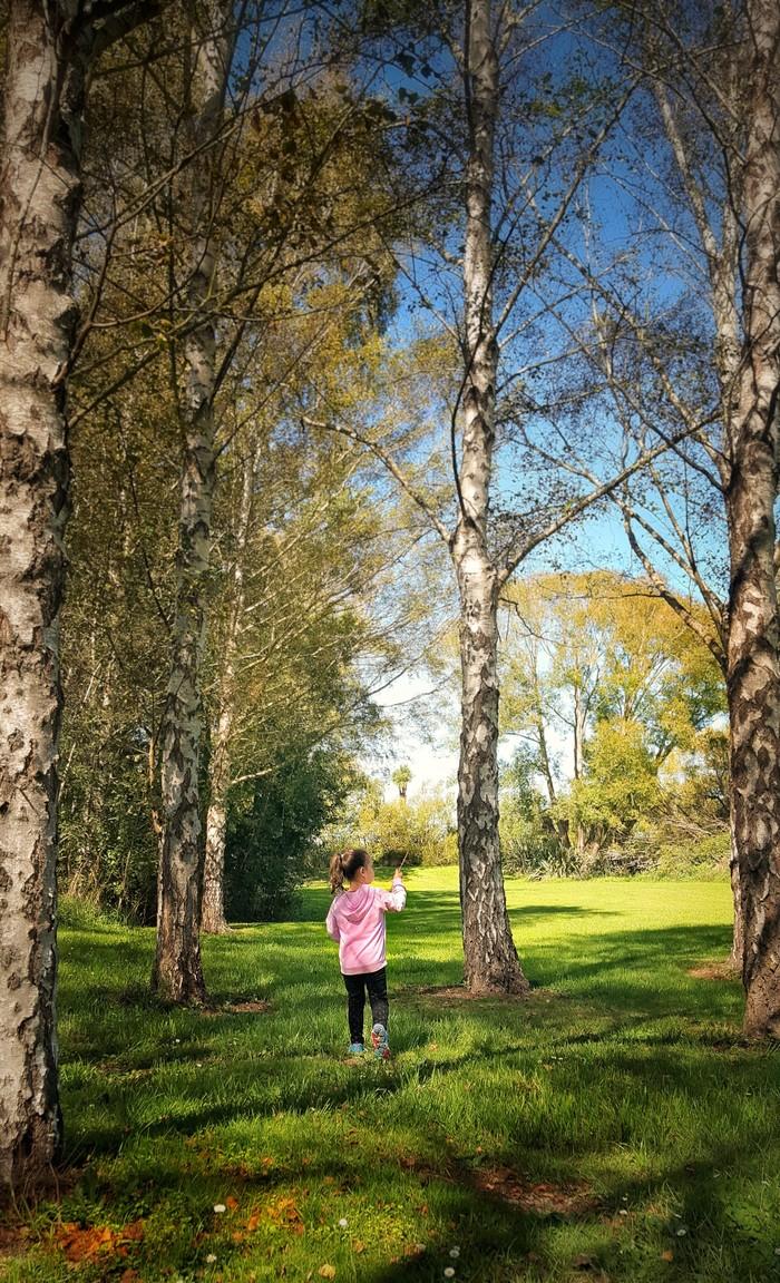 Схема предложения береза это воистину крестьянское дерево фото 303