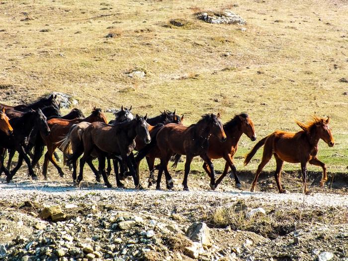 Лошадки Лошадь, Кони, Табун, Вожак, Дикая природа, The National Geographic, Природа, Horses, Длиннопост