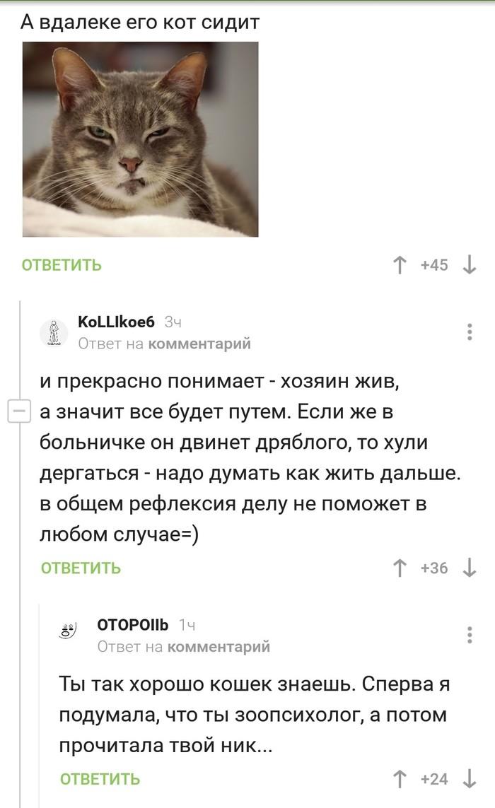 Кошколюб Кот, Комментарии на Пикабу, Комментарии, Скриншот