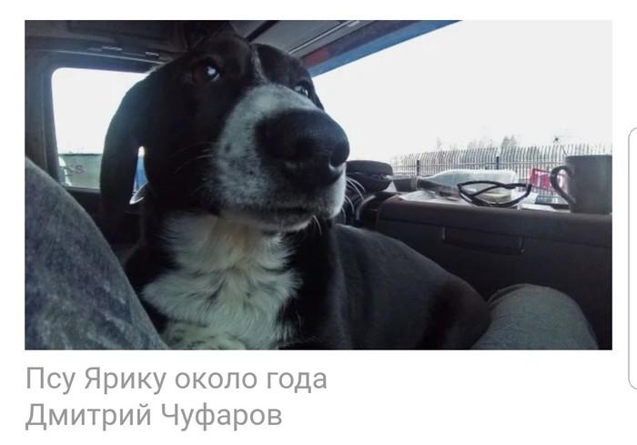 Ярик-дальнобойщик. Челябинск, Собака, Дальнобойщики, Добро, Видео, Длиннопост