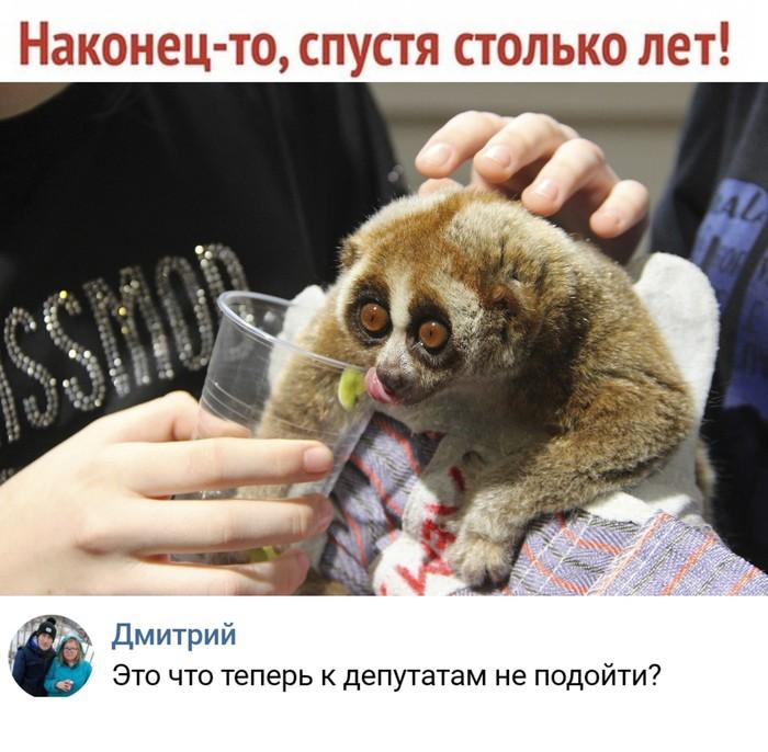 Путин подписал закон о запрете контактных зоопарков