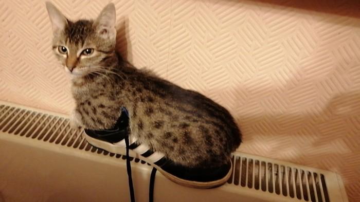 Поставил я значит ботинки сушиться Кот, Фотография, Левый ботинок, Удобство, Длиннопост, Адидас