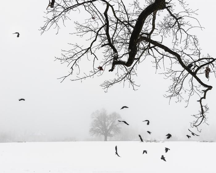 Welcome to Могилёв. Фотография, Туман, Зима, Минимализм, Беларусь, Пасхалка, Nikon
