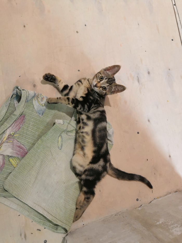 К вопросу о бездомных кошках Лига Добра, Кот, Котята, Милота, Длиннопост, Без рейтинга