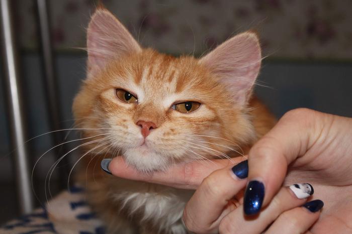 В добрые руки кошка ~3 месяца, г. Брянск Брянск, В добрые руки, Кот, Ищу хозяина, Без рейтинга, Отдам, Даром, Длиннопост