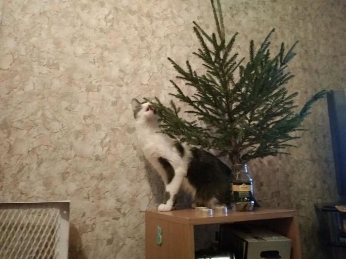 Новогодний кусь. Кот, Ёлка, Кусь, Новый год