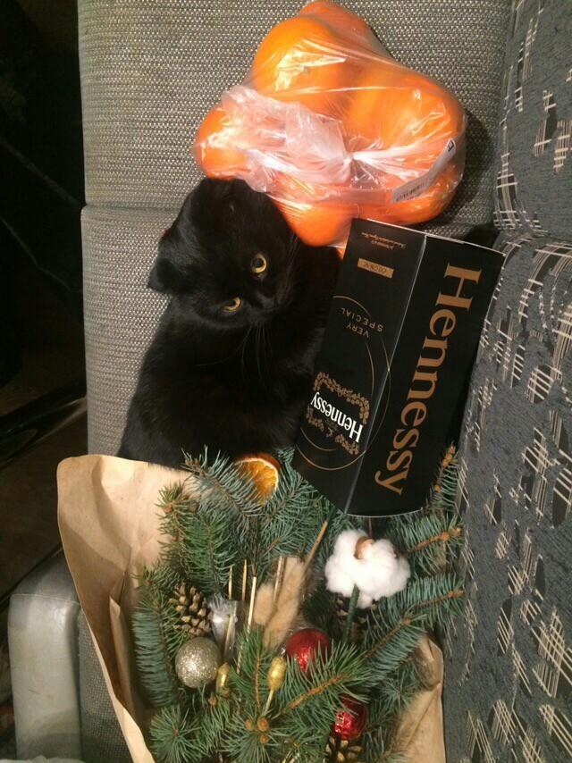 Новый год еще не наступил, а кот уже готов Кот, Котомафия, Новый Год, Праздники, Домашние животные, Жирные