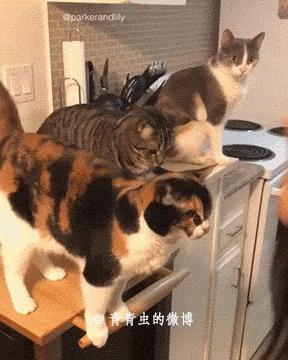 Существует два типа котов