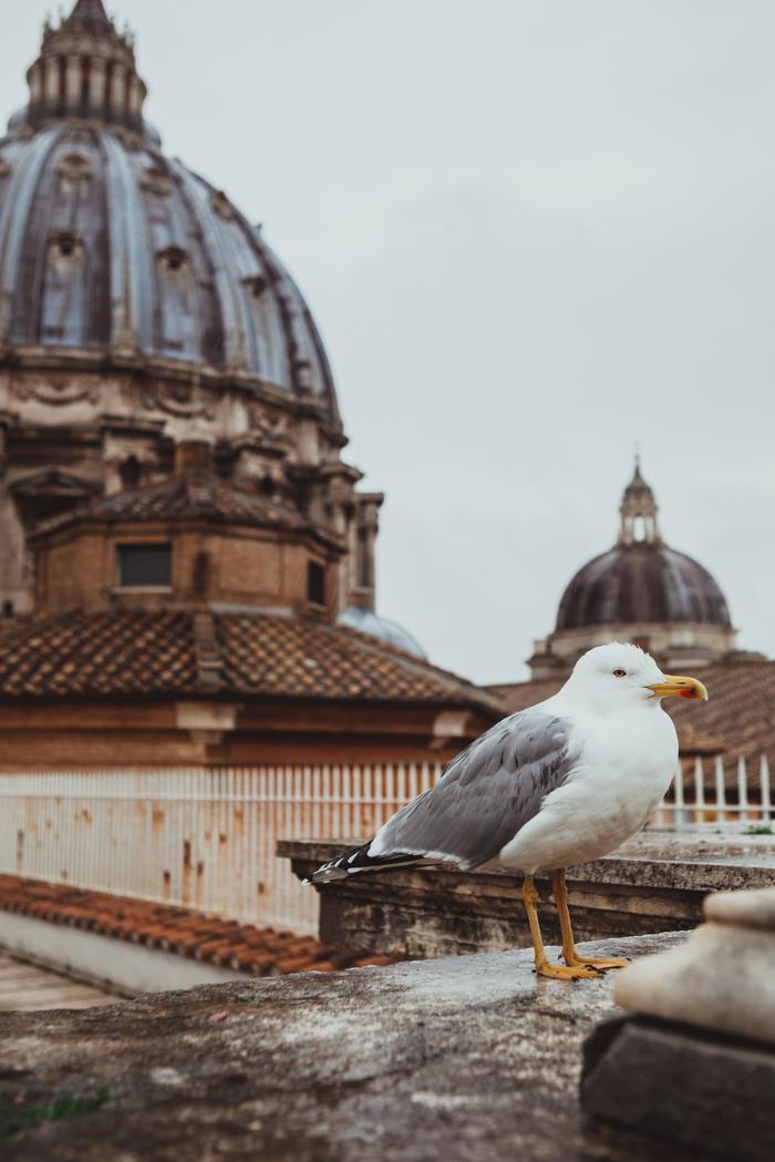 Чайки Рима (и голубь) Рим, Чайка, Римский форум, Путешествия, Фотография, Длиннопост