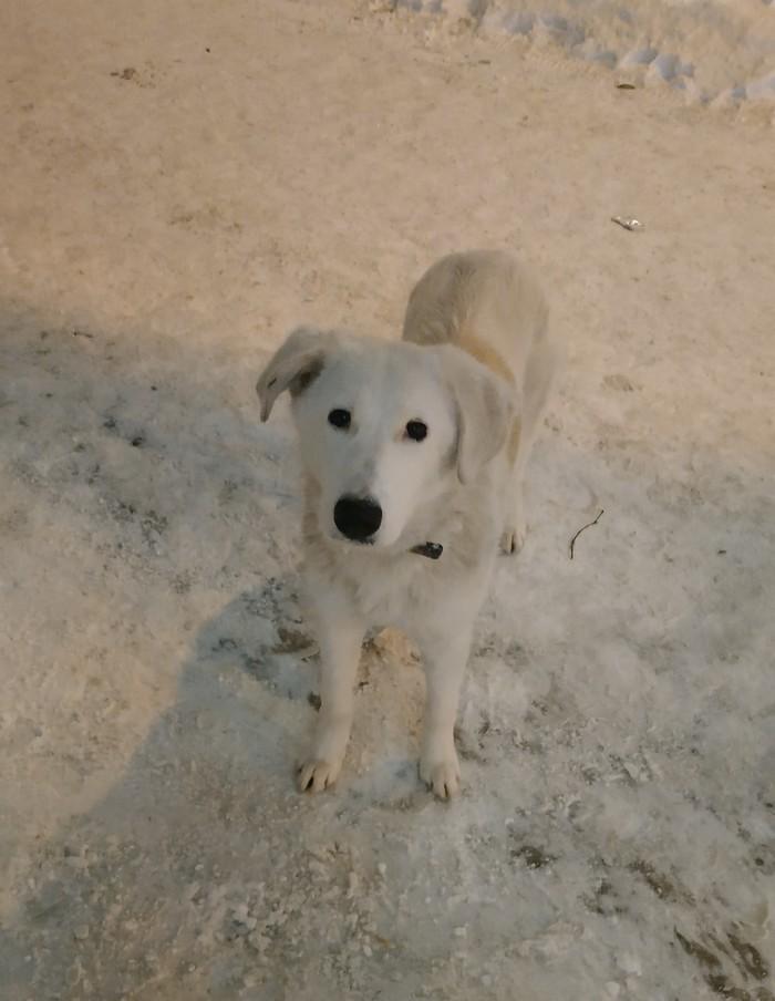 Собака-потеряшка Без рейтинга, Найдена собака, Собака, Казань, Длиннопост