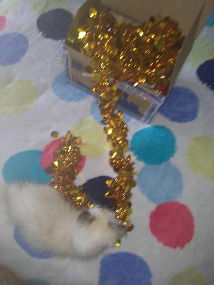 Питерские коты и белочки. А кто вас поздравлял с Новым годом? Отчет по обмену подарками, Санкт-Петербург, Рязань, Длиннопост, Обмен подарками