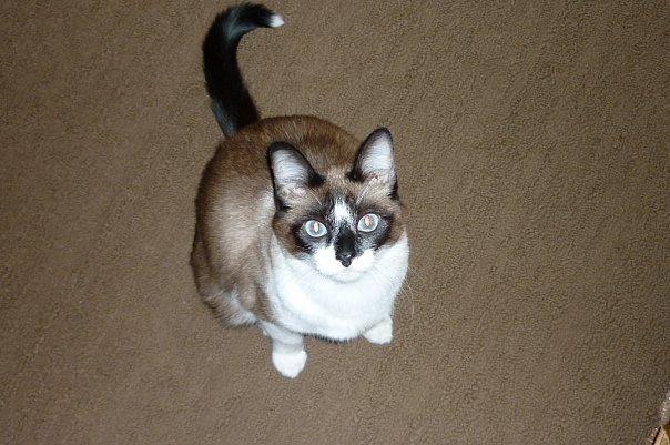 Мой первый кот - злыдень. Кот, Злой, Длиннопост, Воспоминания, Сложный выбор, Домашние животные, Воспитание