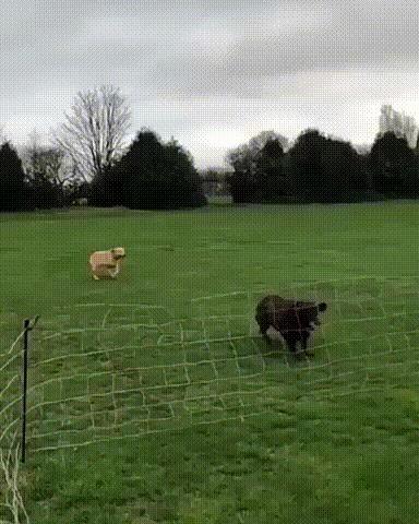 Бежим, Джонни,бежим!
