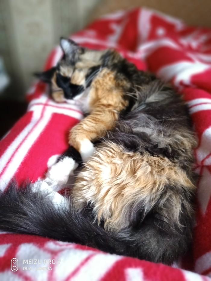 Вот так мы спим Кот, Сон, Длиннопост