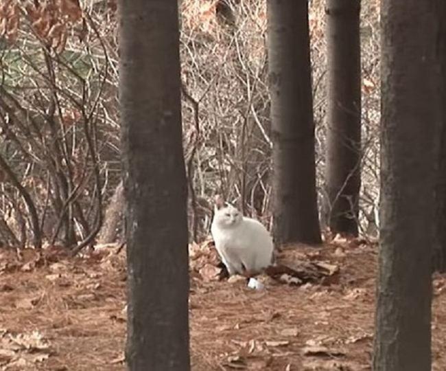 Брошенный кот в лесу толстел и не хотел уходить Кот, Длиннопост, Видео, Толстый, Лес, Корея, Спасение животных