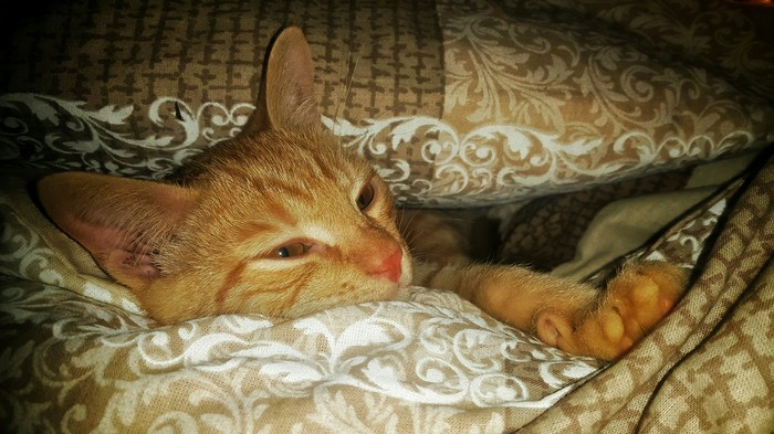 Немного рыжего кота. Рыжий, Кот, Котомафия, Сплюшка, Главный, Длиннопост