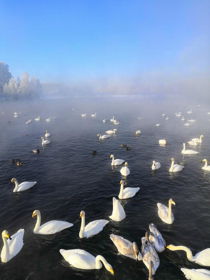 Лебединое озеро. Алтай Алтай, Сибирь