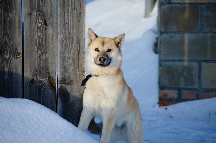 Собака улыбака Фотография, Начинающий фотограф, Собака, Nikon d5100