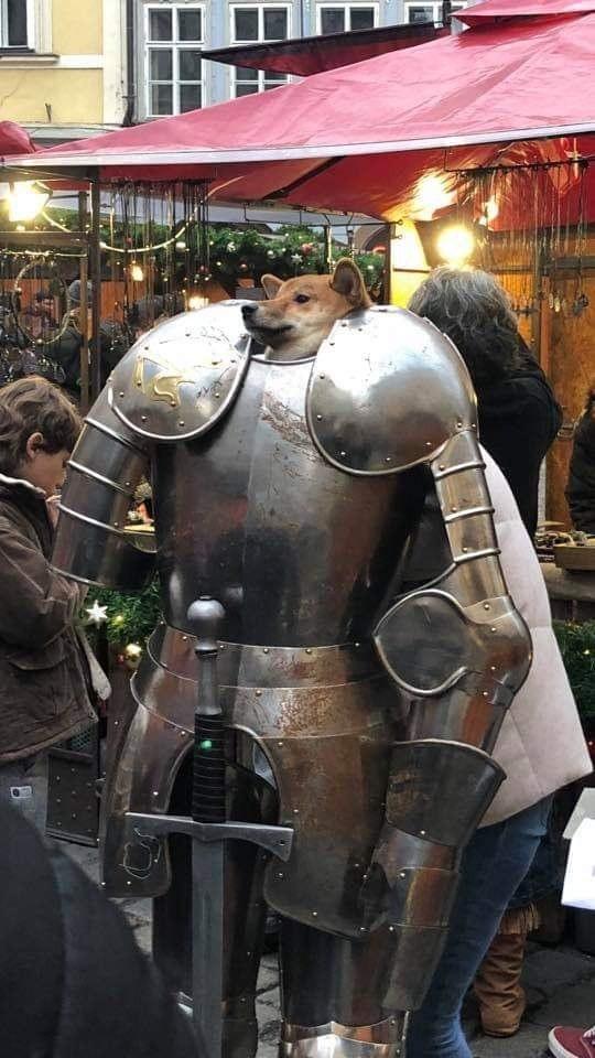 Хороший мальчик в средневековье Собака, Рыцарь, Косплей, Хороший мальчик, Милота