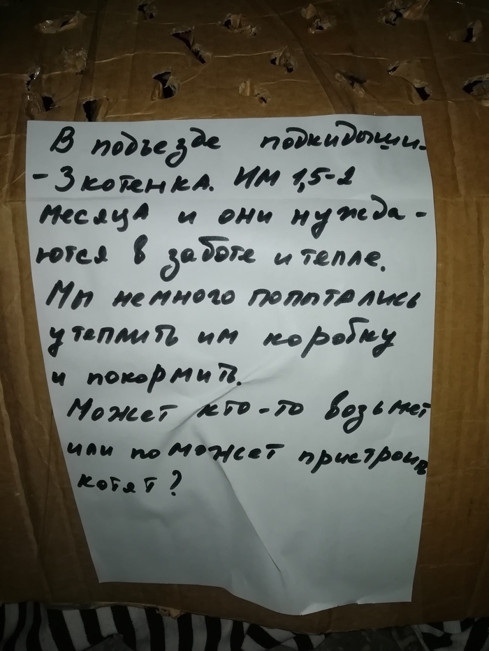 Омск, котики Омск, Без рейтинга, Длиннопост, Кот, Помощь животным, В добрые руки